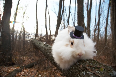 white rabbit in a top hat on a tree in the forest photo