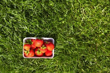 녹색 잔디 상위 뷰에 상자에서 딸기