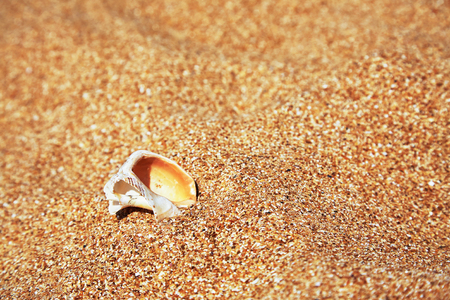 conch shell: Conch Shell over sand. Summer beach background