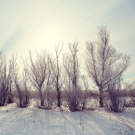 beautifull: scenic winter landscape. view trees with snow