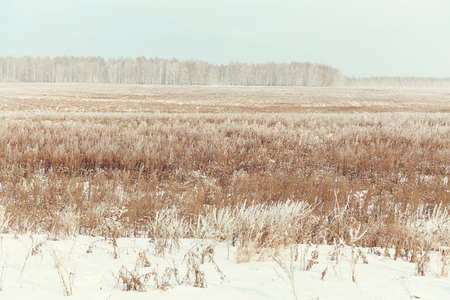 beautifull: scenic winter landscape. view field with snow Stock Photo