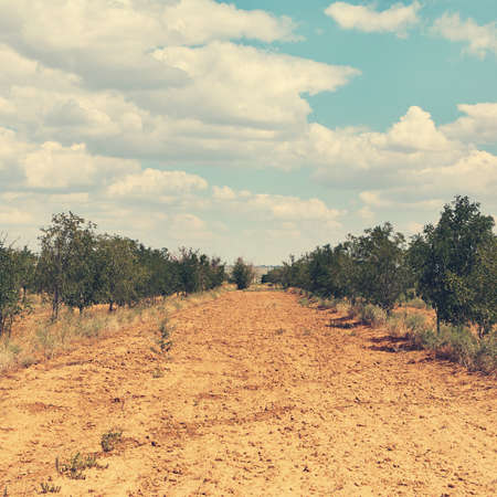 Scenic nature. dry steppe and trees. natural background Stock Photo