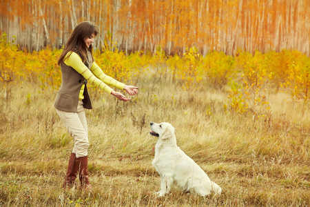 Labrador retriever with owner Standard-Bild