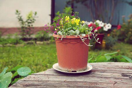 Flores de jardín en una maceta de cerámica sobre un fondo de madera Foto de archivo