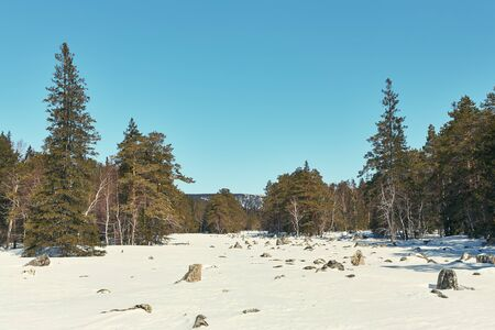 scenic winter landscape. forest with fir trees. Stok Fotoğraf
