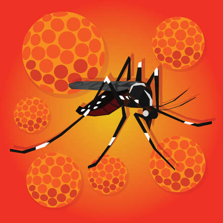 aedes: zika zica virus masquito virus aedes aegypti spread pandemic aoubreak vector illustration Illustration