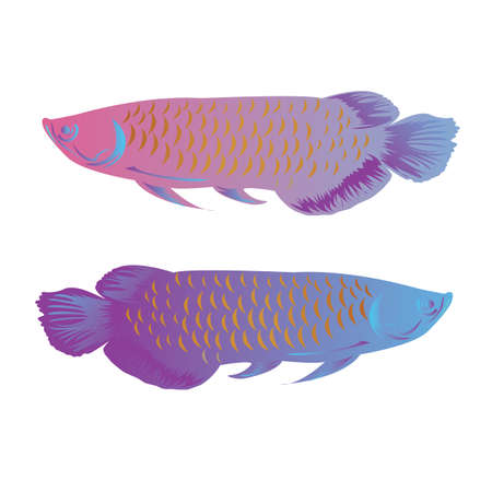aquaria: arowana fish isolated vector illustration colorful freshwater asian symbol of wealth vector