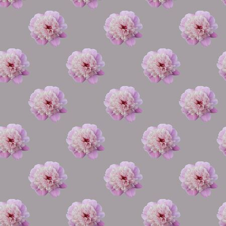 Seamless pattern of pink peonies on a gray background. Flat lay, top view. Peony flower texture