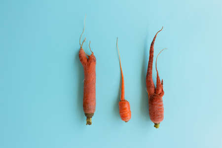 Ugly carrots on a blue background. Top view