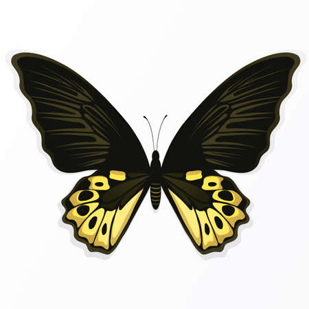 Illustration of the butterfly on a light background Vector