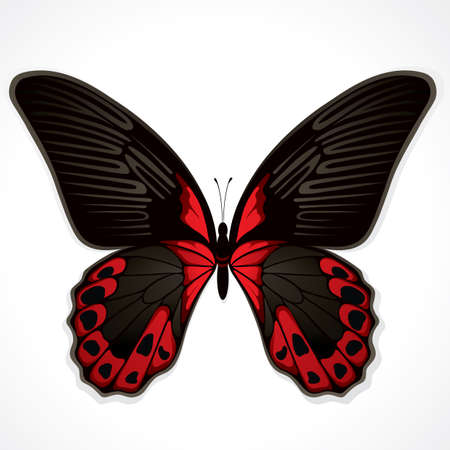 spread: The red butterfly