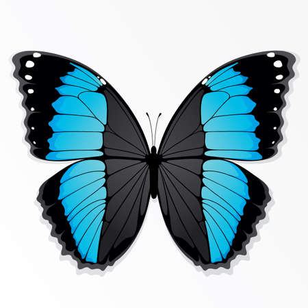 The azure butterfly Vector
