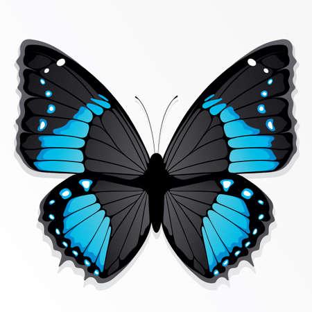 silhouette papillon: Le papillon bleu