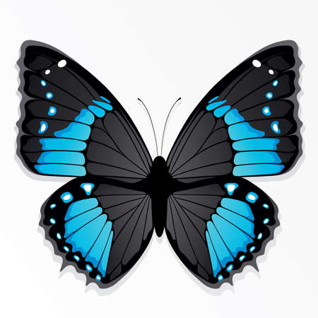 butterflies flying: The blue butterfly Illustration