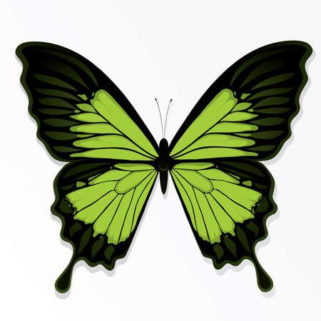 butterflies flying: La mariposa