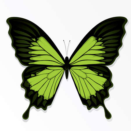The butterfly Vector