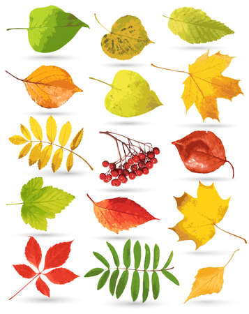 Collection of leaves Stock Vector - 10992080