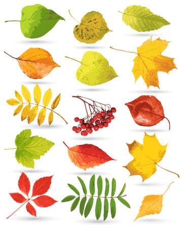 hojas de arbol: Recolección de hojas