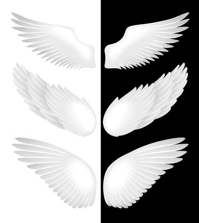 angel white: Wings. Vector illustration Illustration