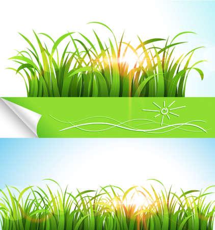 Green grass. Stock Vector - 14813783