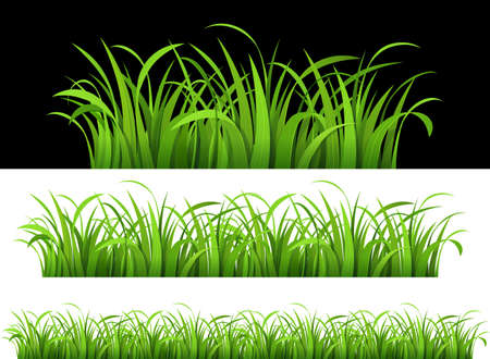 grass illustration: Green grass.