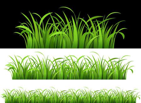 grass land: Hierba verde. Vectores