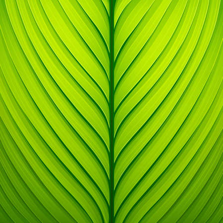 Texture of a green leaf.  Vector