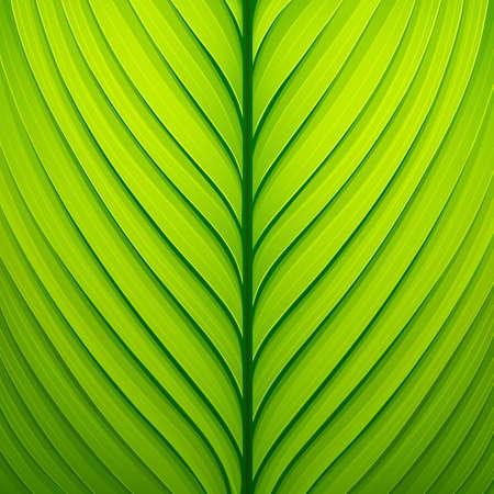 Textuur van een groen blad.