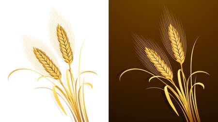 whole grain: Wheat ears  Vector Illustration