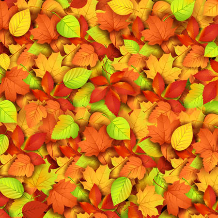 park herbst: Autumn leaves illustration