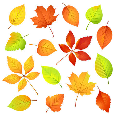 Autumn leaves   illustration Vector