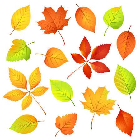 yellow leaves: Autumn leaves   illustration Illustration