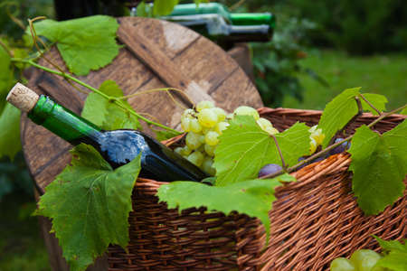 red wine bottle: Still Life with Grapes Stock Photo