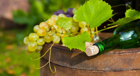 Composition with white grapes photo
