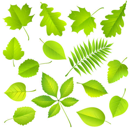 macro leaf: Collection of green leaves. Vector