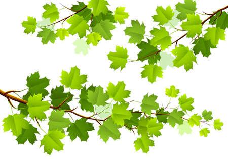 Green maple leaves Stock Vector - 18198189
