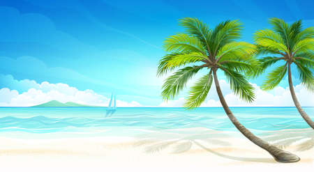 coconut tree: Tropical beach.