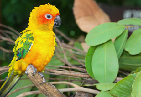 two parrots: Tropical parrot