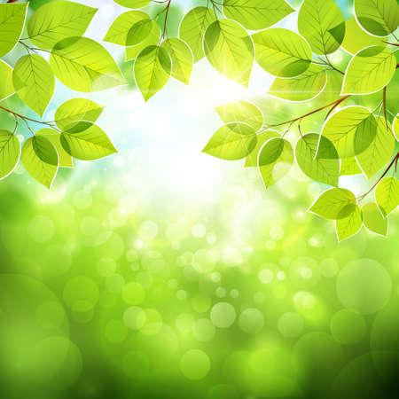 fondo natural: Fondo natural con hojas