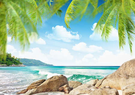boulder: Tropical beach with palm trees and stones