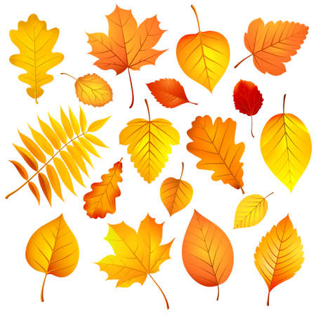 Autumn leaves. Vector illustration Vector
