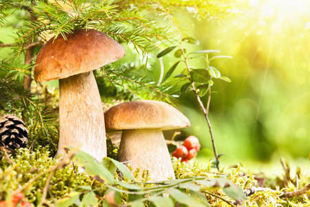 Wild mushrooms with bright sunlight photo
