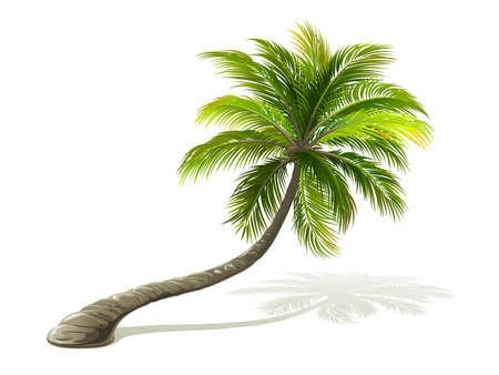 Palm met schaduw geïsoleerd op wit. vector illustratie