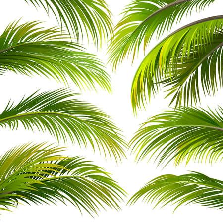 palmeras: Palma deja aislado en blanco. Ilustración vectorial Vectores
