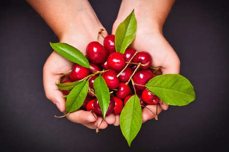 Ripe cherries in hands on dark background