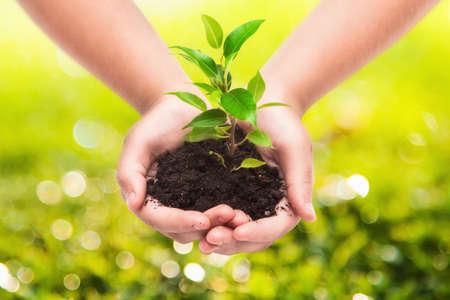 아이 녹색 식물은 자연 배경에 손