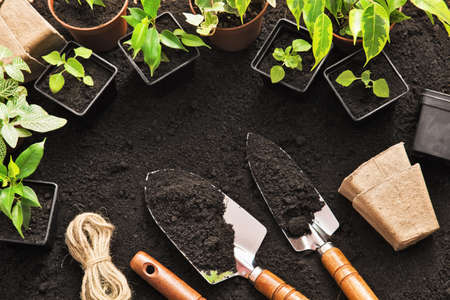 garden tool: Gardening tools and plants on land