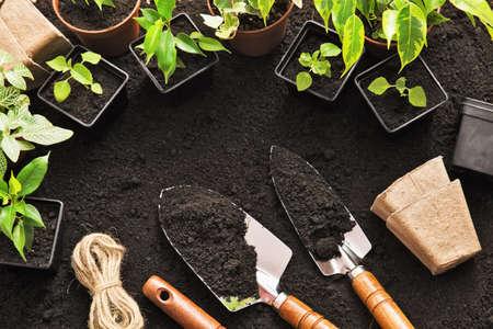 jardines con flores: Herramientas y plantas en la tierra que cultivan un huerto Foto de archivo