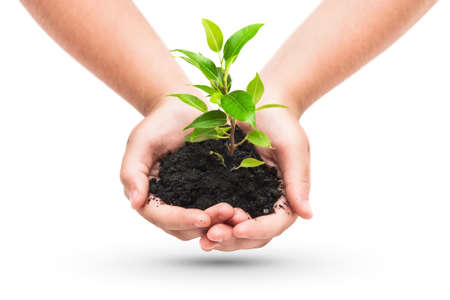 plants growing: Green plant in a child hands isolated on white Stock Photo