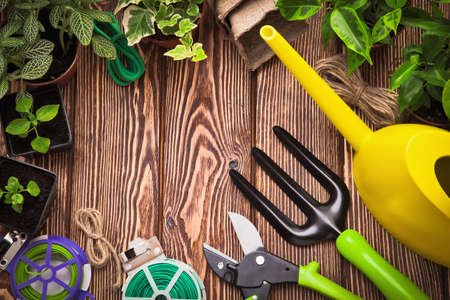 Garden tools and plants on a wooden background